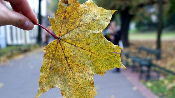 Pielęgnacja cery, skóry rąk i ust jesienią: Kilka krótkich porad