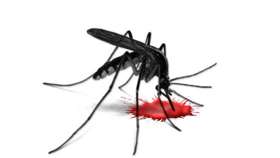 Wirus Zachodniego Nilu w Mauricie