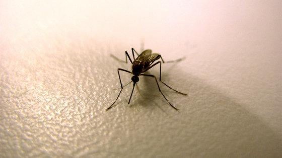 Malaria: szczepionka przeciwko malarii testowana w Gabonie