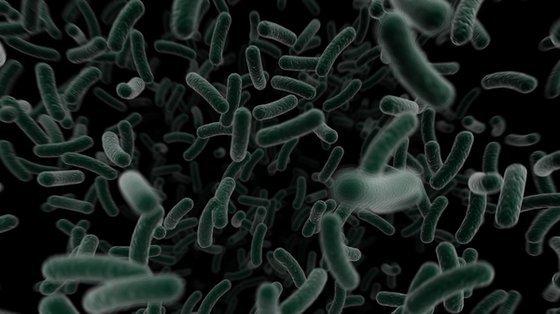 Toksyny bakterii w żywności mogą powodować stwardnienie rozsiane