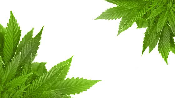 Marihuana powoduje udar mózgu?