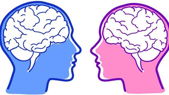 Iloraz inteligencji zależny od budowy mózgu